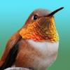 Hummingbirds - Medium (Retina)