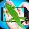 Reptil In Foto: Schlange und Eidechse auf der Hand