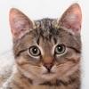 Katzen Hintergründbilder HD + Nur die besten hintergrundbilder von Katzen