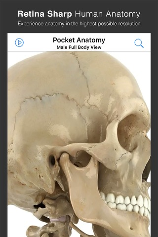Pocket Anatomy. screenshot 1