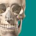 Atlas de l'anatomie du squelette