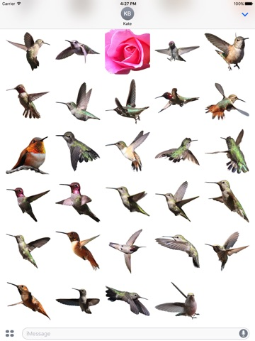 Hummingbirds - Medium (Retina) screenshot 3