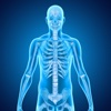Medical Terminology : Skeletal System