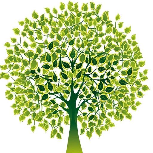 Mind Trees