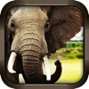 Wild Elephant Simulator 3D Crazy Attack Game Free crush fight