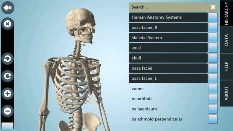 Skeletal System 3d Anatronica Interactive Anatomy By Goodwill
