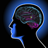 E-Action Info: Your epilepsy resource