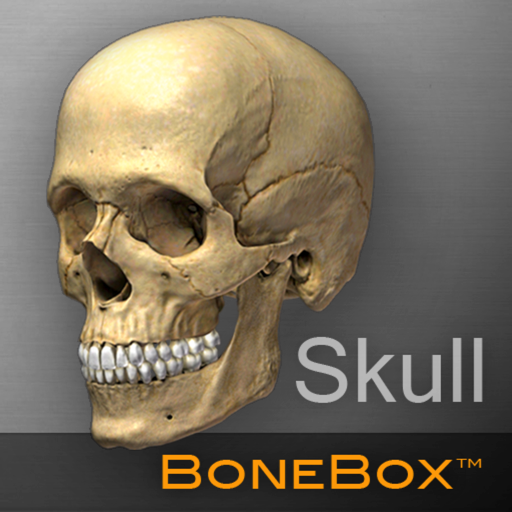bonebox-skull-viewer