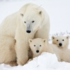 Bear Wallpapers - Cute Collections Of Bear Wallpapers