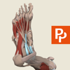 Foot: 3D Real-time Human Anatomy - Subscription