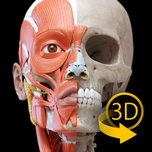 肌肉系统 – 三维解剖学图谱 – 人体的骨骼和肌肉   Muscular System - 3D Atlas of Anatomy