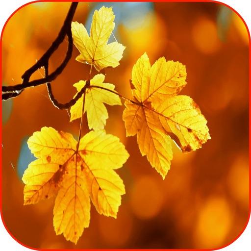 Autumn Leaves 3D HD Wallpaper Background & Autumn Puzzles iOS App