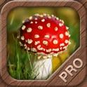 Mushrooms PRO - NATURE MOBILE - For Safe Enjoyment! icon
