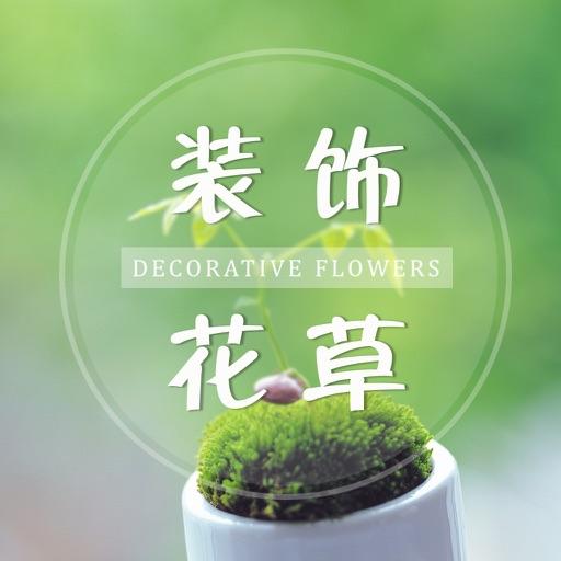 家庭养花实用秘籍—装饰花草