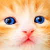 Cat Kitten Kitty Pet Baby Animal JIgsaw Puzzle Games for Girls who love educational memory learning puzzles for kids and toddlers