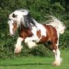 Best Horse Breeds