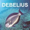 Helmut Debelius: Fischführer Indischer Ozean & Rotes Meer