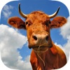 Farm Animals Wallpapers Including Beautiful Backgounds of Baby Animal, Cows Eating Hay, Goats Enjoying Their Day