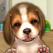 마이독스 - 나의 첫번째 강아지.