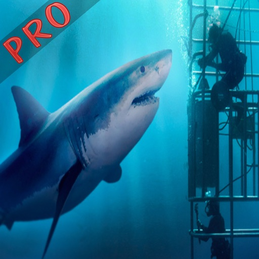 Angry Shark Extreme Rampage Pro iOS App
