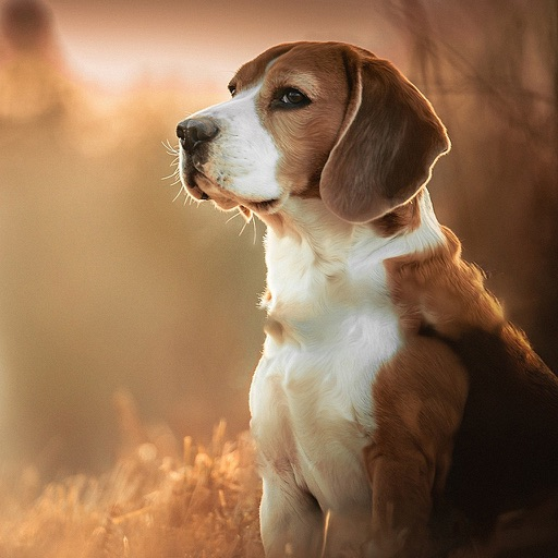 Dog Wallpapers Backgrounds Pro Home Screen Maker With