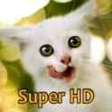 Kittens Retina Super HD 2048 for new iPad icon