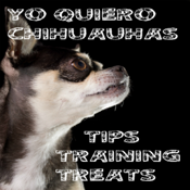 Yo Quiero Chihuahua app review