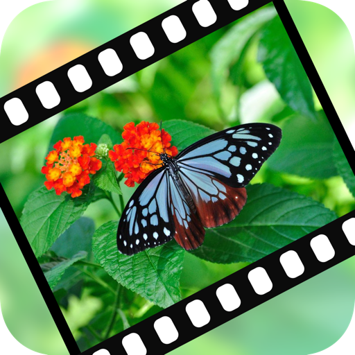 "VideoStiller ~ Pull out special ""moments"" from your video!"