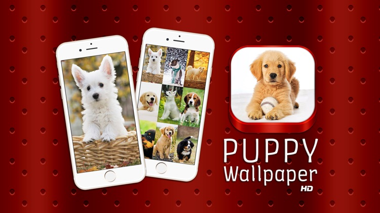 puppy wallpaper hd free cute dog puppies background s for adorable