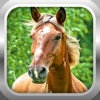 3D Horse Simulator Free: Extreme Forest Horse Run Sim Game