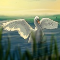 Where Do Swans Sleep? picture story book app for kids icon