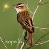 Chants d'oiseaux avec reconnaissance et référence automatiques (édition française)
