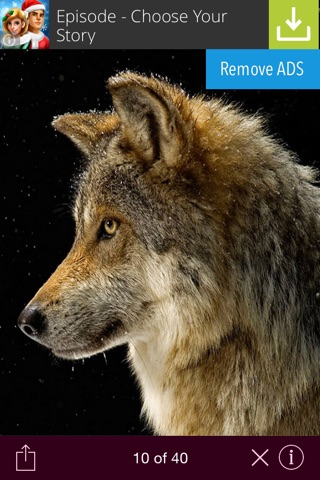 Wild animals wallpaper screenshot 3