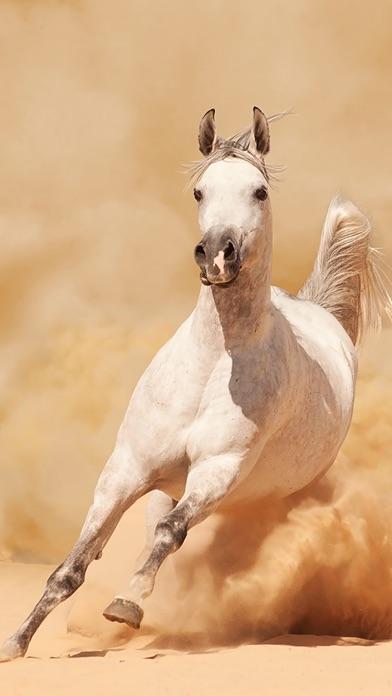 Dream Horses review screenshots