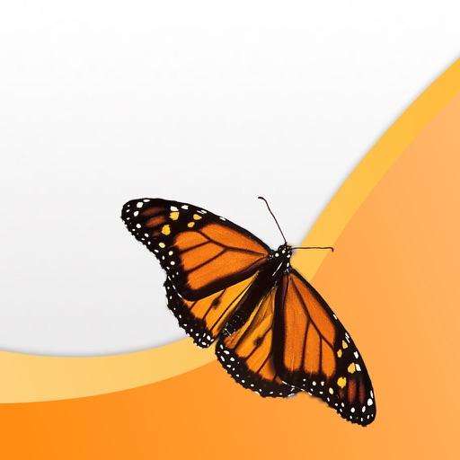 EFI Monarch
