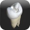 CavSim : Dental Cavity Preparations Free