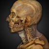 Anatomy & Physiology REVEALED®: Skeletal & Muscular