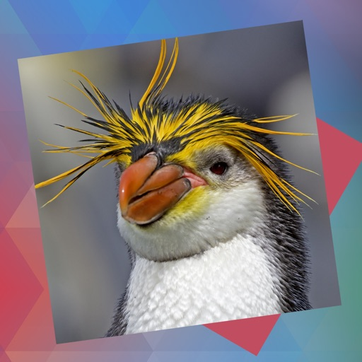 Déjà Vu - Birds iOS App
