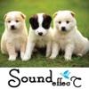 Amazing Big Animal Sounds