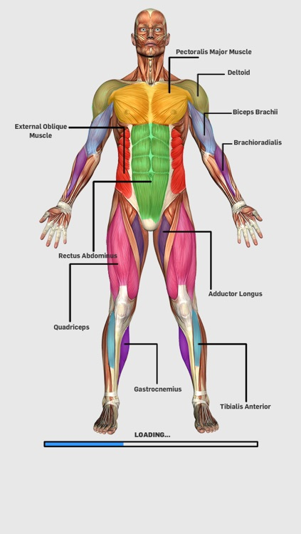 Muscular Anatomy Game By Nar Internet