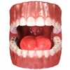 Teeth Anatomy 3D