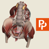 Female Pelvis: 3D Real-time Human Anatomy - Subscription