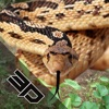 Deadly Anaconda Snake Simulator 3D