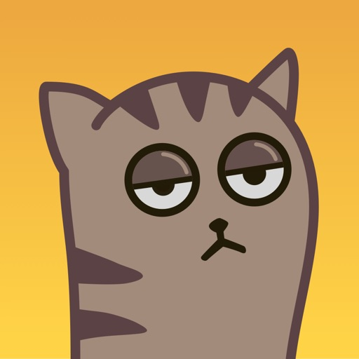 Fixel the Snob cat