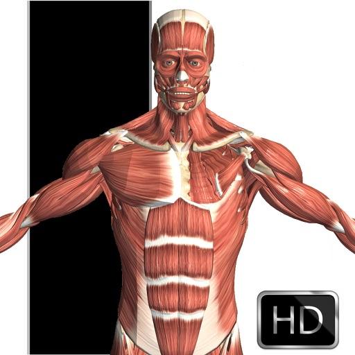 人体解剖:Visual Anatomy