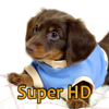 Puppies Adorable Wallpapers for new iPad - Great HD photo screen backgrounds of cool dogs