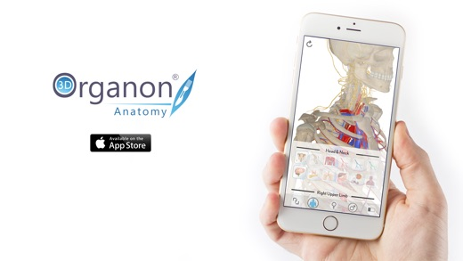 3D Organon Anatomy - Skeleton, Bones, and Ligaments on the App Store