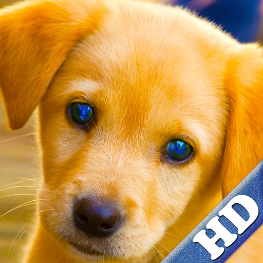 Puppies Jigsaw Puzzle Games for Girls & Boys with Baby Pet Dog who Loves Animal Puzzles & Pictures for Kids HD iOS App
