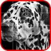 Picross Album - Nonogram
