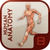 Video Training for Human Anatomy anatomy